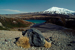 Mount Ruapehu. Alpine landscape, Tongariro NP, New Zealand  -  Tim Edwards