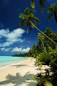 Coconut Palms, beach and coral lagoon. Aitutaki, Cook Islands.  -  Phil Chapman