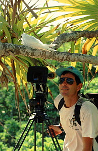 Cameraman Mike Pitts filming white tern on Henderson Island for BBC television series 'Nomads of the Wind'.  -  Phil Chapman
