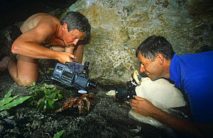 """Cameraman Mike Pitts filming Coconut Crab {Birgus latro} on Henderson Island for BBC television series """"Nomads of the Wind"""", 1992  -  Phil Chapman"""