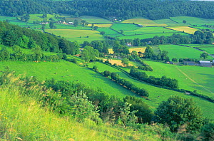 Countryside near Uley, Cotswolds, UK - woodland, hedgerows, patchwork of fields  -  David Noton