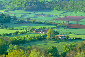 Countryside nr Uley. Cotswolds UK - woodland, hedgerows, Patchwork fields  -  David Noton