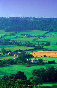 Farmland near Uley, Gloucestershire, in the Cotswolds, England  -  David Noton