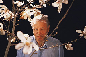 "David Attenborough on location in Japan, with Magnolia grown from 2,000 year-old seed, filming for BBC television series ""Private Life of Plants"", 1994 - NEIL NIGHTINGALE"