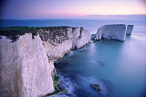 Dawn, Old Harry and his wife. The Foreland, Studland, Dorset. English coastal scene.  -  David Noton