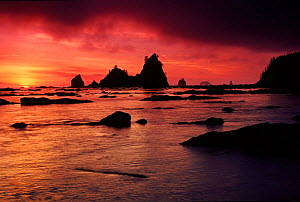 Olympic NP at sunset. Washington, USA  -  Tim Edwards