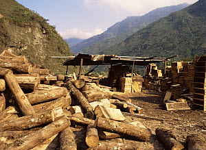Timber from rainforest, used to make wooden boxes, Ecuador  -  MORLEY READ