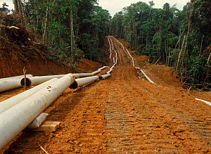 Laying pipeline for oil extraction in rainforest. Ecuador, South America - MORLEY READ