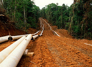 Laying pipeline for oil extraction in rainforest, Ecuador  -  MORLEY READ