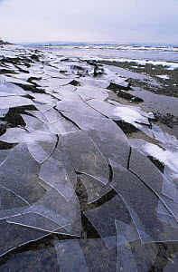 Broken ice sheets wahsed up on shore of estuary, Montrose Basin, Angus, Scotland.  -  Niall Benvie