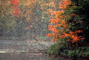Early snow in autumn. Michigan, USA  -  Larry Michael