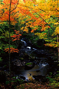 Kakabicka Falls in autumn. Michigan, USA  -  Larry Michael