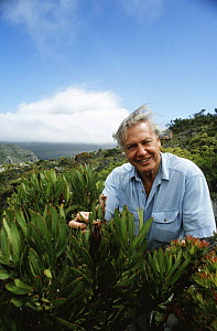 David Attenborough with (Protea sp) plant, Cape Point, South Africa, on location for BBC Private Life of Plants, 1993 - NEIL NIGHTINGALE