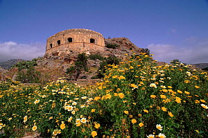 Venetian fort surrounded by wild chrysanthemums, Spinalonga, Crete  -  Niall Benvie