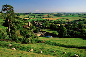 Corton Denham village scene with farmland, Somerset, England.  -  David Noton