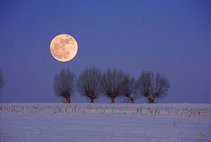 Poland in winter. Podlasie. Full moon and snow landscape.  -  Artur Tabor