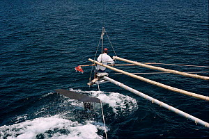 Testing suction device as a possible method for attaching tracking and research equipment to whales. Sperm whale in picture, Galapagos 1994.  -  Kit Rogers