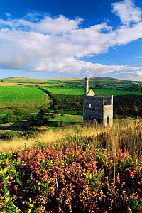 Old Tin mine on edge of moor, Dartmoor National Park, Devon.  Heather and Gorse in foreground.  -  David Noton