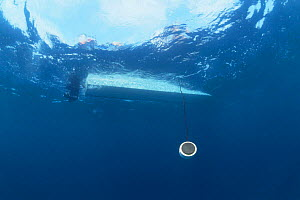 Hydrophon for recording humpback whale song, Gorgona Is, Columbia - Jurgen Freund