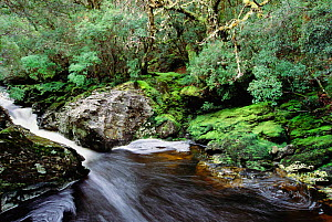Pencil Pine River, Cradle Mountain, Lake St. Clair NP, Tasmania. Along the Enchanted Trail  -  Steven David Miller