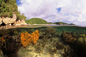 Split-level of Sponge underwater at low tide, Indo-Pacific - Jurgen Freund