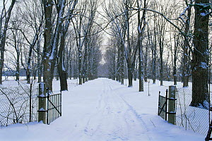 Looking down snow covered driveway through gates in winter, Wisconsin, USA, sequence 1 / 4  -  Larry Michael
