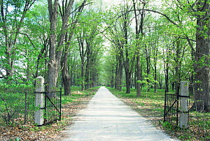Looking down driveway through gates in spring, Wisconsin, USA, sequence 2 / 4  -  Larry Michael