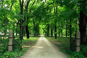 Looking down driveway through gates in summer, Wisconsin, USA, sequence 3 / 4  -  Larry Michael