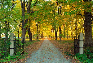 Looking down driveway through gates in autumn, Wisconsin, USA, sequence 4 / 4  -  Larry Michael