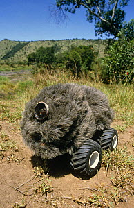 """Remote control """"lion buggy"""" used to film Lion pride in BBC television series """"Supersense"""", 1989 - John Downer"""