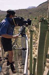 Camerman Richard Ganniclift filming saguaro cactus from a crane. Arizona USA 1993/94 for BBC series Private Life of Plants - NEIL NIGHTINGALE
