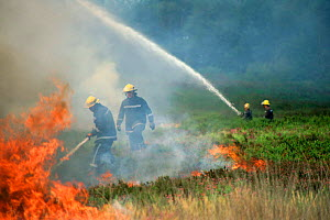 Firefighters using water hoses to put out heathland fire, Corfe Mullen, Dorset, UK - GRAHAM HATHERLEY