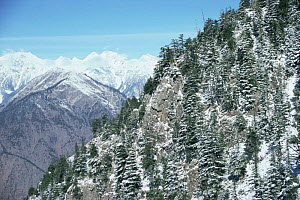 Snow covered trees and mountains Palas Valley, Pakistan. - Nigel Bean