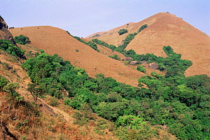 Grassland / shola ecosystem in dry season. Brahmagiri National Park, S India - Ana Lockwood
