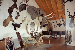 Trophy room, Klipspringer lodge, Nelspruit, South Africa - WILLIAM OSBORN