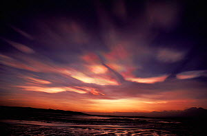 Nacreous / Mother of pearl clouds. Montrose, Scotland.  -  Niall Benvie