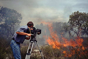 Richard Ganniclifft filming bush fire in Western Australia, on location for BBC series 'Private Life of Plants' 1993 - Neil Lucas