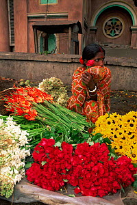 Girl selling flowers at Calcutta flower market, Calcutta, West Bengal, India - Pete Oxford
