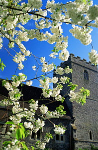 Spring blossom at Llanfrynach church, Brecon Beacons NP, Powys, Wales, UK - David Noton
