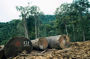 Deforestation through timber logging, Sabah, North Borneo, Malaysia - Georgette Douwma