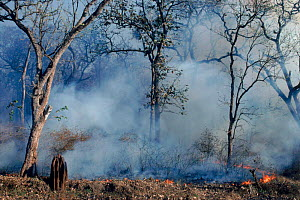 Smoke and forest fire. Nagarahole NP, Southern India - Lockwood & Dattatri