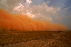 Dust storm preceeding thunderstorm in the Sahel, Mali NB Person watching  -  GRANT MCDOWELL