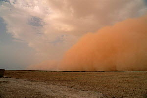 Dust storm preceeding thunderstorm in the Sahel, Mali, West Africa  -  Grant McDowell
