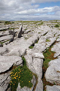 Limestone pavement, The Burren, Co Clare, Ireland  -  DAVID TIPLING