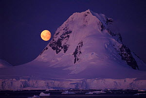 Moon rising over Lemaire Channel, Antarctic Peninsula  -  Pete Oxford