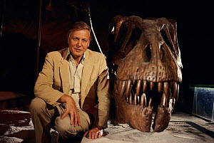 Sir David Attenborough with Tyrannosaurus rex skull. On location for BBC tv series 'Lost Worlds Vanished Lives' 1988  -  NEIL NIGHTINGALE