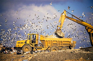 Seagulls flying around above truck unloading rubbish on landfill site, Buckinghamshire, England - Mark Payne-Gill