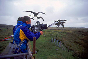 Filming imprinted Greylag geese flying from truck for BBC tv series 'Supernatural' - John Downer
