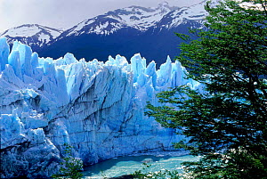 Perito Moreno glacier, Los Glaciares National Park, Argentina, South America - Pete Oxford