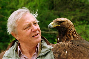 David Attenborough, presenter of BBC TV series 'The Life of Birds', with golden eagle, 1998  -  Rob Cousins